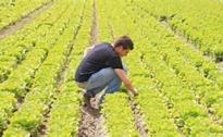 Insediamento Giovani Agricoltori