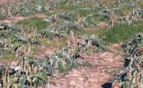 Sos siccità: dichiarato lo stato di emergenza
