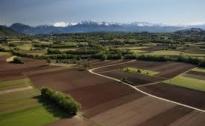 Le aziende agricole di Cia: basta promesse ora vogliamo i fatti
