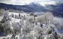 Olivi : segnalazione danni da gelo