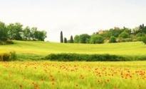 La Cia dell'Umbria sollecita la Regione a finanziare gli investimenti della aziende agricole e dei giovani agricoltori