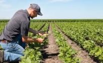 Illusione dei giovani agricoltori umbri
