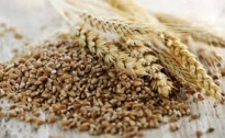 Cereali, crollo dei prezzi agricoltori in ginocchio